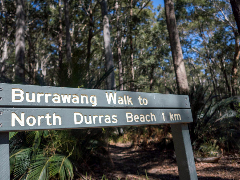 beach and bush walking at depot beach, Burrawang Walk